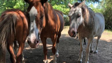 Photo of FLOW Estrena ¨cinco Corazones¨, documental contra el maltrato animal de caballos en Argentina